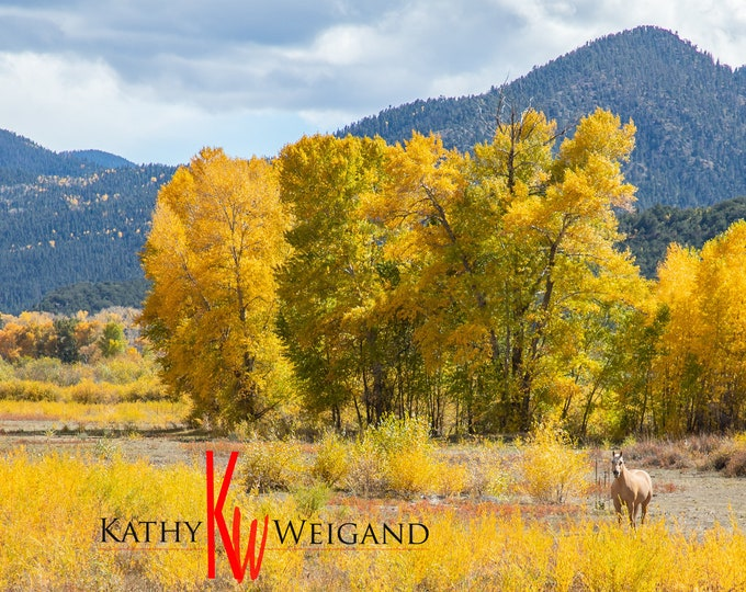 Golden Horse Valley, New Mexico Fine Art Print