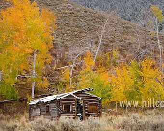 Old Timers Log Cabin, Fine Art Photography Print