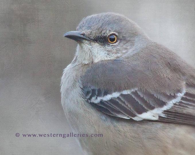 Mockingbird Portrait, Square Fine Art Print