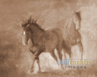 Wild Stallions of McCullough Peaks Wyoming