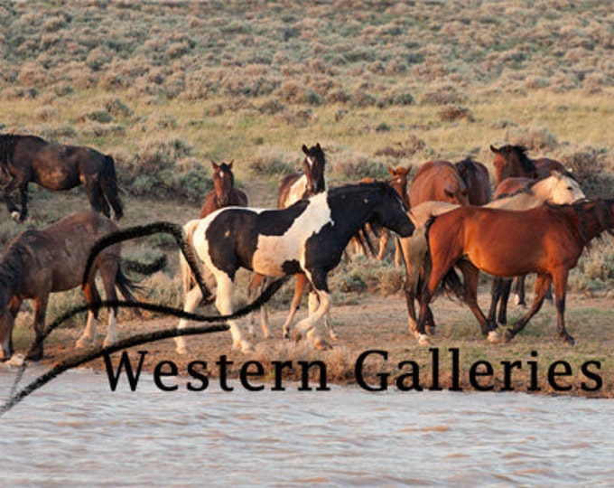 At the Watering Hole, Wyoming Mustangs, Wild Horses, Signed  Print