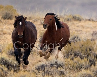 The Chase, Wild Horses McCullough Peaks Wyoming, Signed Photography Print