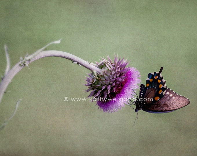 Butterfly & Thistle Flower