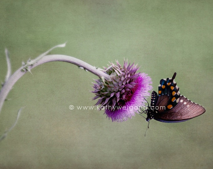 Butterfly & Thistle Flower Fine Art Print
