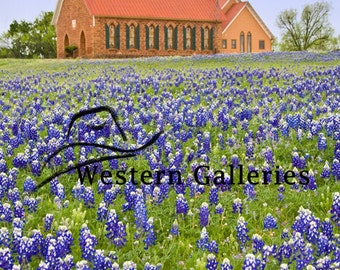 Art Texas Church, Mason Tx Hill Country Bluebonnets Signed Fine Art Print