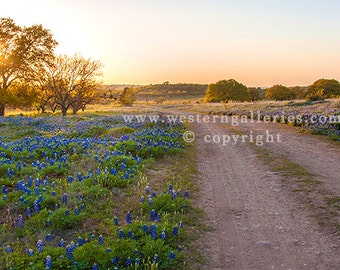 Texas Hill Country BackRoad Signed Fine Art Print.