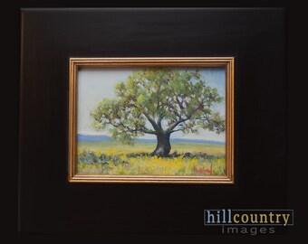 Original Oil Painting, Lone Oak, Framed Artwork
