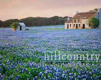 Bluebonnet Farm, Texas Hill Country Wildflowers Signed Fine Art Print