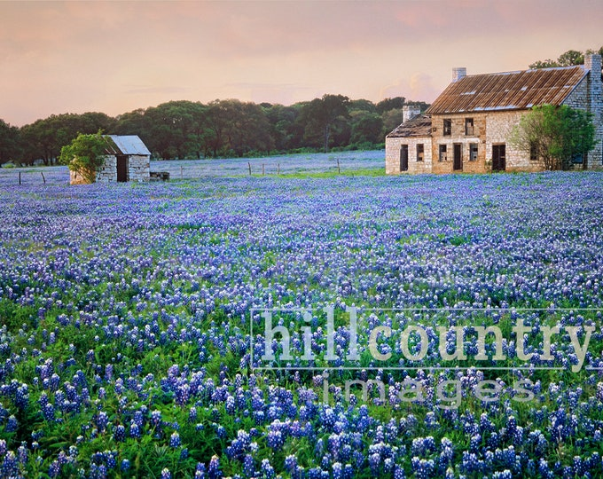 Bluebonnet Farm, Texas Hill Country Wildflowers Signed Fine Art Print