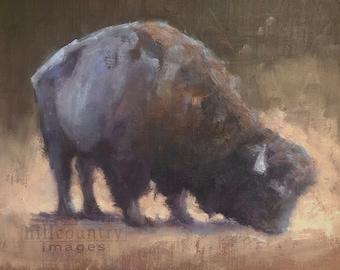 Mini Art Sale - Original Oil Painting Bison Grazing 6x8