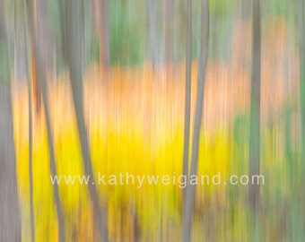 Large Aspens Abstract Canvas Wall Print