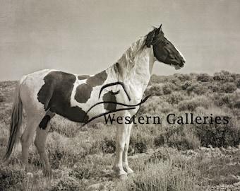 Freedom Wild Stallion Tecumseh, McCullough Peaks Wyoming Brown Toned Print