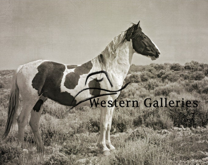 Freedom Wild Stallion Tecumseh, McCullough Peaks Wyoming Brown Toned Print