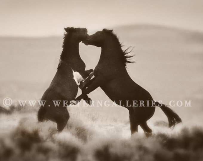 The Challenge, Wild Stallions of McCullough Peaks Wyoming, brown toned Signed Fine Art Print