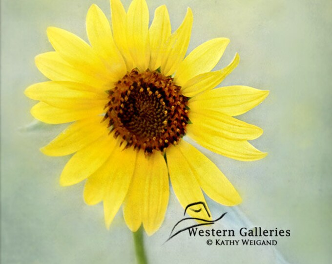 Small Yellow Sunflower,  Signed Fine Art Print
