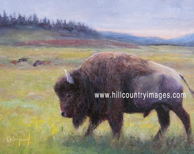 Yellowstone Bison, Signed Fine Art Print