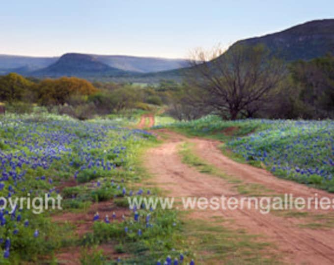 Willow City Loop, Fredericksburg Texas Hill Country Photography Print