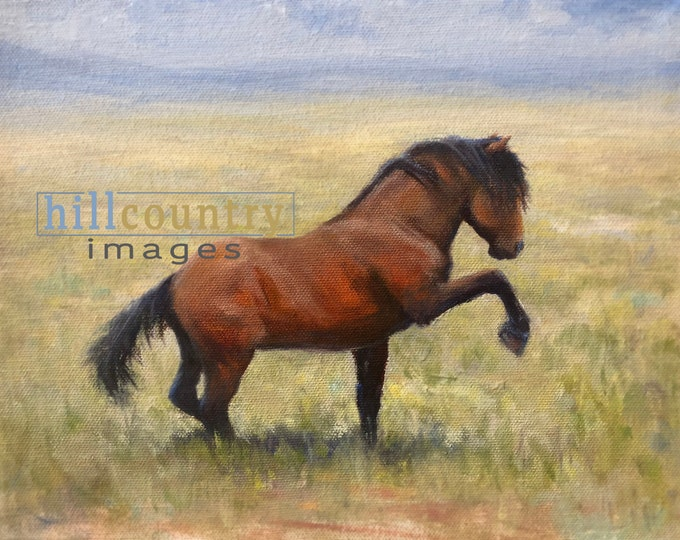 Original Oil Painting Wild Bay Stallion