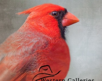 Cardinal Portrait, Hill Country Nature Photography Print