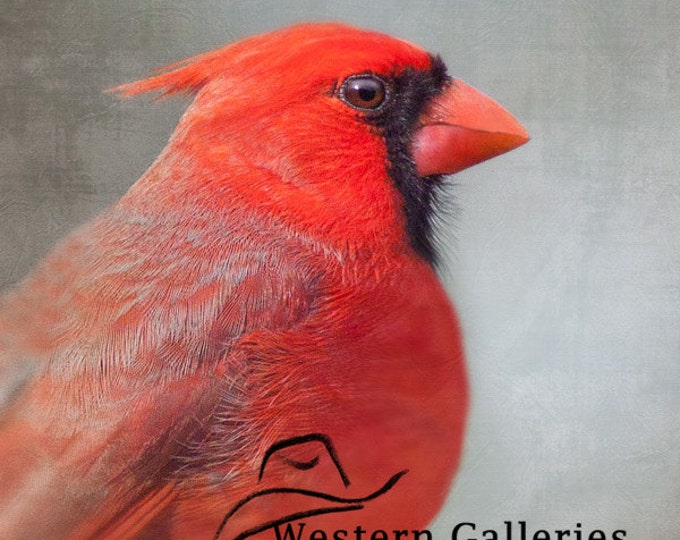 Portrait of a Red Cardinal