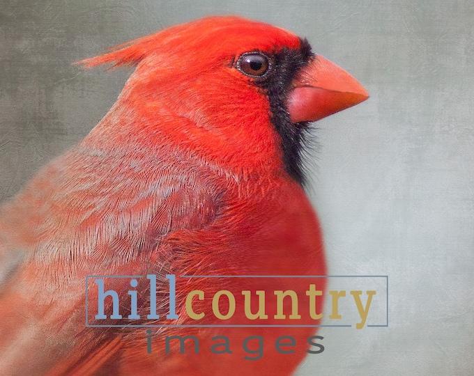 Mini Art Sale - Portrait of a Red Cardinal