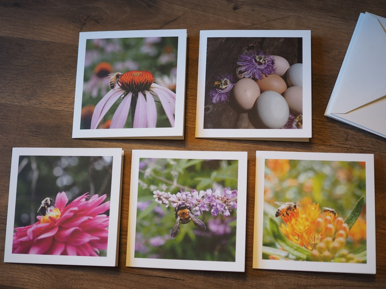 Photo Note Cards Pollinator Series Pack of 5 with envelopes image 0