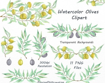 Watercolor Olives Clipart, PNG, Olive branch, Olive tree clip art, leaves, digital clipart, Watercolour, for Personal and Commercial Use