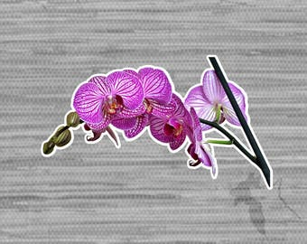 Orchid Bumper Sticker Decal 4"