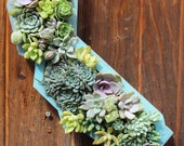 Ready to ship! Planted California State Succulent Hanging Planter
