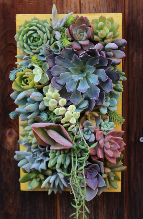 Sale 12 X 7custom Succulent Vertical Garden Etsy