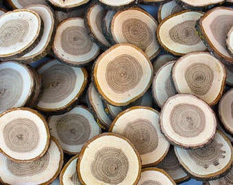 """25 Oak 2.5"""" - 3"""" Wood Slices. Rustic Tree Branch Slices for Craft. Natural Wood Slices"""