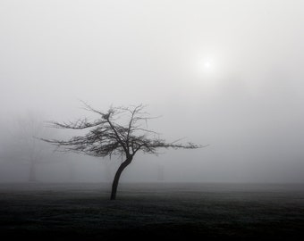 Sun and Tree (Ref: 9470)