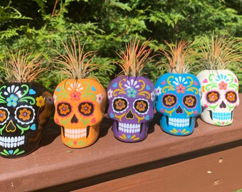 Day of the Dead Sugar Skull Small Air Plants & Succulents , Airplant, Air Plants,