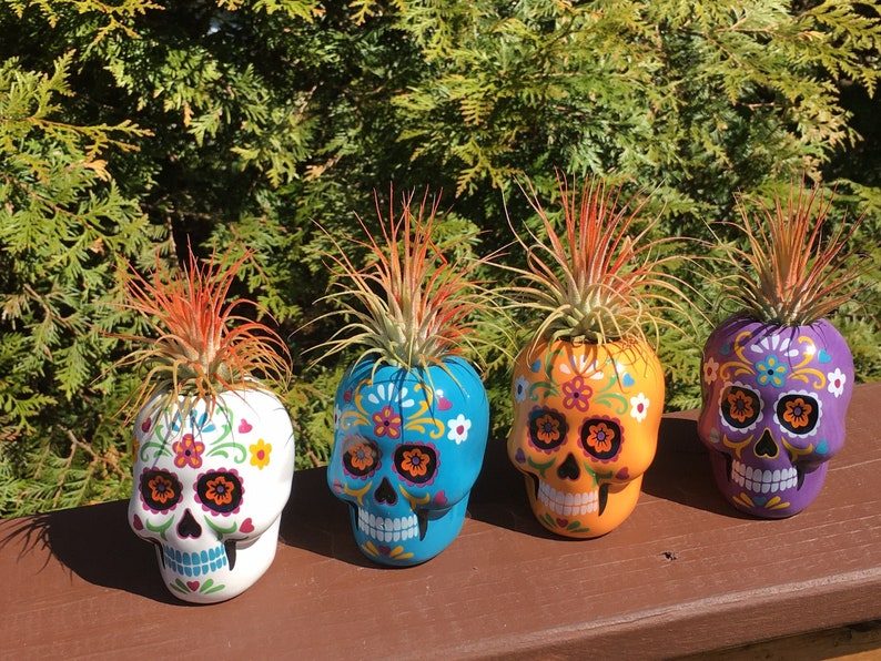 Day of the Dead Sugar Skull Small Air Plants & Succulents  image 0