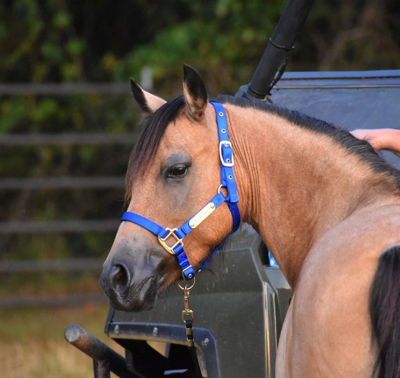Nylon Horse Halter with One Brass Tag BH725 image 0