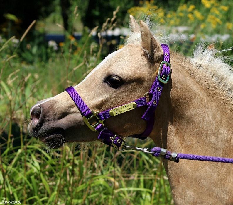 Miniature & Pony Nylon Halter with One Brass Tag BH225 image 0