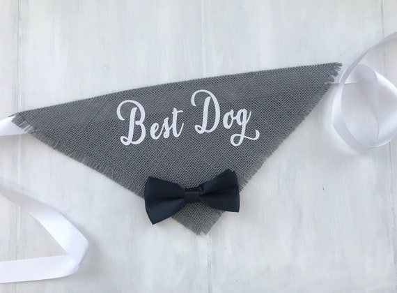 Best Dog Wedding Bandana Gray With Satin Bow Tie In Script Engagement Photos Save The Date Cards Collar Boy Bow Tie Proposal