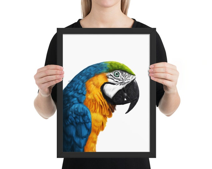 Macaw - Framed poster
