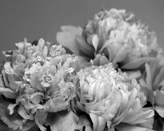 Peony Art Black And White Flower Print Floral Photography Etsy
