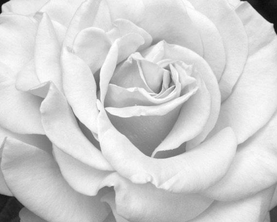 Black And White Art Rose Print Grey Flower Photography Light Etsy
