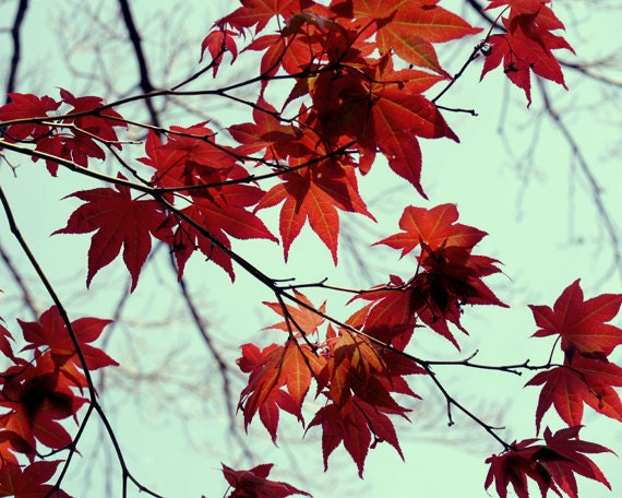 Japanese Maple Tree Leaves Photography Red And Mint Wall Art Etsy