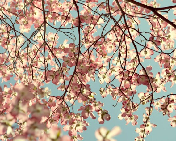 Dogwood Tree Print Floral Branch Artwork Aqua Light Pink Etsy