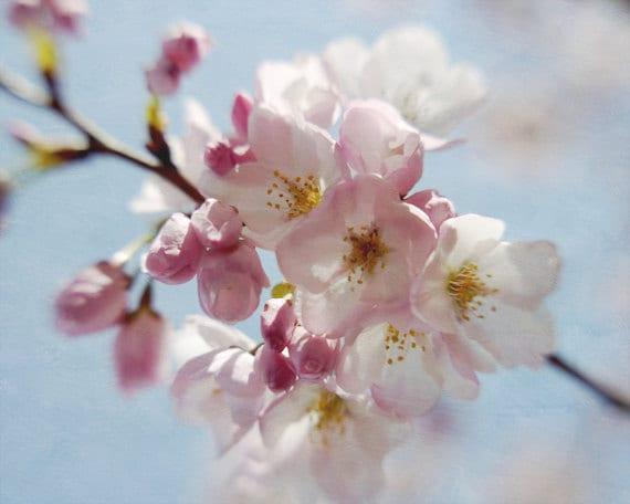 Sakura Tree Blossom Japanese Cherry Blossom Pink Flower Print Etsy