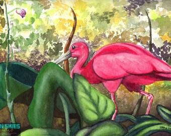 Scarlet Ibis Giclée Print
