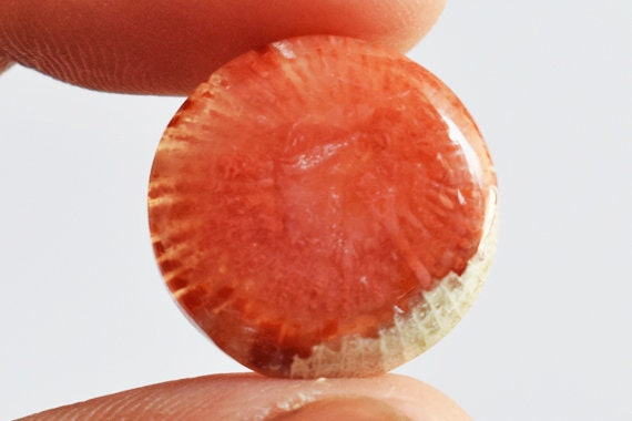 Stone From Utah Top Quality Natural Fossilized Red Horn Coral Round Cabochon New Pendant Stone AG-10258 Jewellery Making Size 21x21x4 MM
