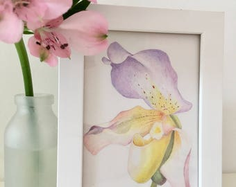 Colorful Orchid Framed drawing