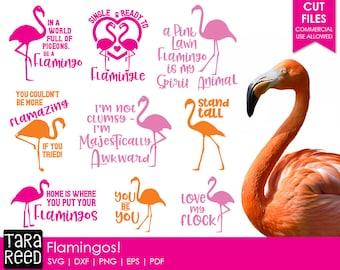 Flamingo svg files / Flamingos / Flamingo svg / svg files / svg files for Cricut /svg files for silhouette / svg bundle