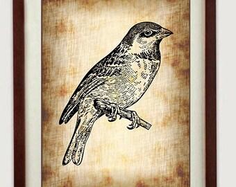 Télécharger INSTANT Sparrow Black Print imprimable de Style parchemin Wall Art Decor oiseau animaux sauvages dessin Vintage