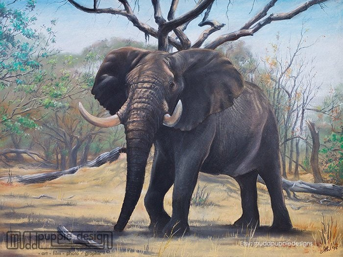 African ELEPHANT Bull artwork print ILLUSTRATION wildlife ...