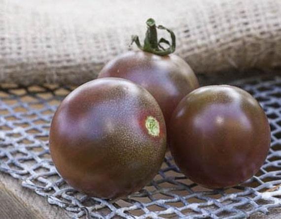 Paquet de graine cerisier Heirloom tomate Premium